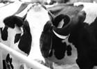 飞鹤乳业打造智能生产工厂