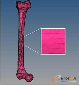 经网格划分的股骨