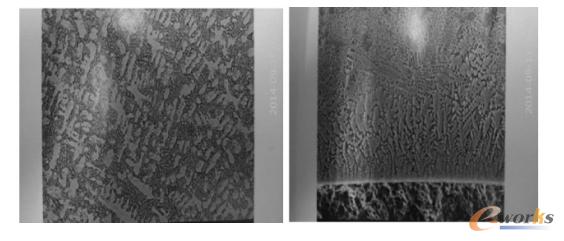图1 熔覆层底部显微组织SEM像