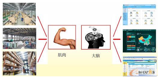 发挥肌肉与大脑的最佳状态