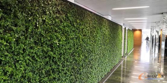 丹佛斯集团内的绿植背景墙