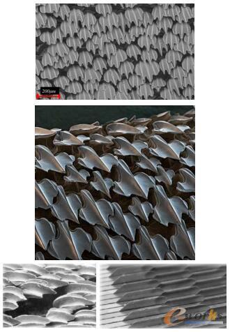 鲨鱼盾鳞与沟槽结构