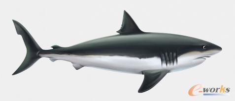 鲨鱼的流线型体形