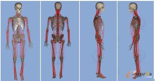 图2. 虚拟人肌肉骨骼模型 (2)虚拟物理人:在可视人中加入人体组织的力学特性和形变等物理特性,通过物理建模使虚拟人可以模拟人体对外界物理刺激的感应,可由物理学模型来实现。 (3)虚拟生物人:研究人体微观结构及生物化学特性,能实现从宏观到微观、从表象到本质全方位反映人体交互数字化虚拟人体,模拟人的各种生物学、生理学特征。 (4)虚拟智能人:用虚拟现实和人机交互技术,把虚拟物理人和虚拟生物人结合成一体,利用人工智能技术赋予虚拟人心理学特征,创造出个性人,以研究人类社会行为模式。 目前虚拟人技术仍处于虚拟物